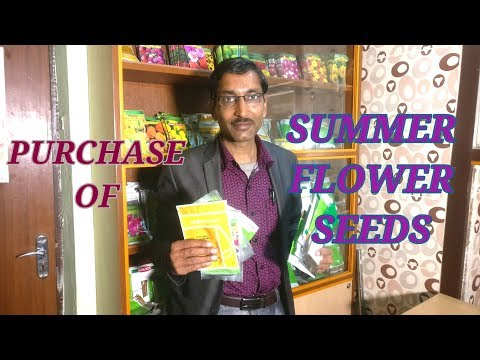 Summer Flower Seeds. Which flower seeds to grow this summer?