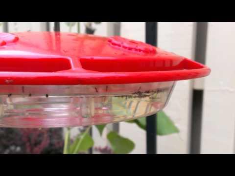 DIY HOW TO KEEP ANTS  OFF YOUR HUMMINGBIRD FEEDER