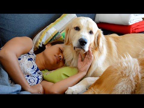 Dogs comforting sick woman on the sofa