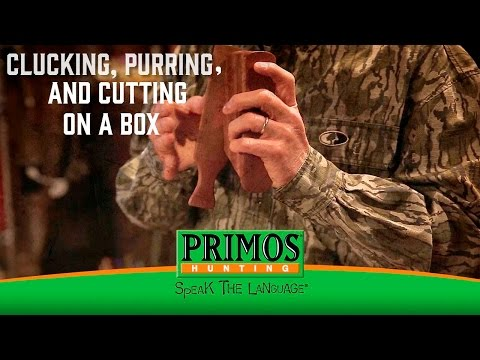 Learn How to Cluck, Purr, and Cut on a Box Call