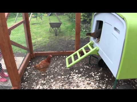 Our 9 chickens and their Omlet Eglu home