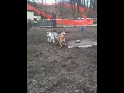 Innappropriate dog park behavior