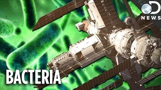 You Don't Even Want To Know About Bacteria On The Space Station