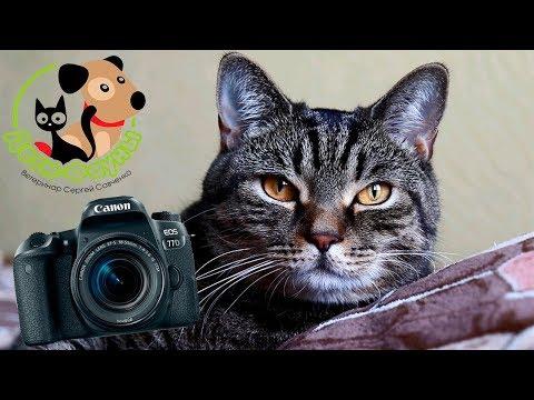 Купили зеркалку Canon 77 d Спасибо зрителям канала! Свершилась мечта :)