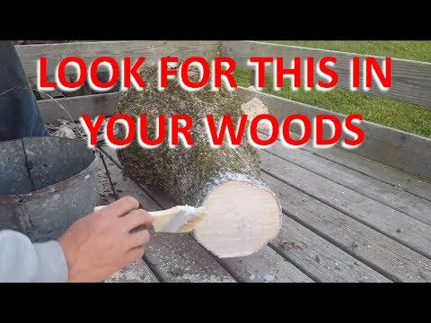 Burls, Black Knot, and Growths: What To Look For and How To Seal Wood