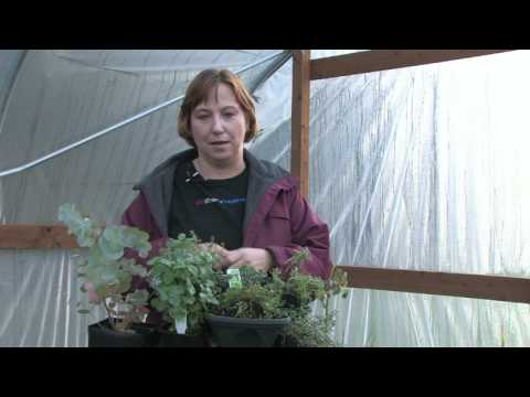 Gardening for Trees & Plants : Repel Rabbits