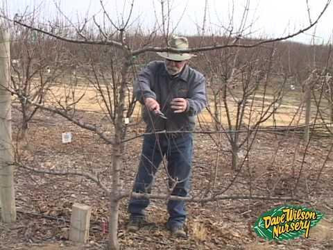Winter Pruning 2014