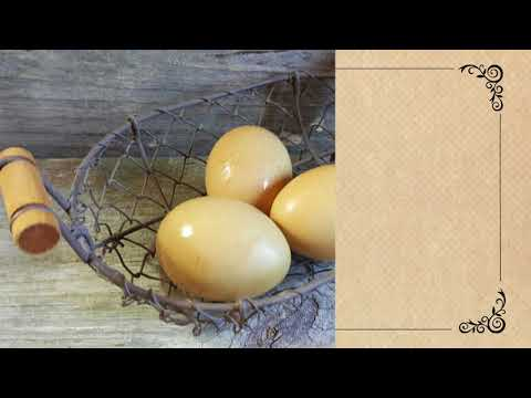 Olive Egger Chicken: Breed Spotlight