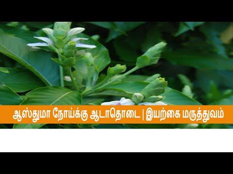 ஆஸ்துமா நோய்க்கு ஆடாதொடை| Asthma | தமிழ் மருத்துவம்