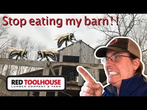 Ep102:How do you keep the carpenter bees from eating your buildings?