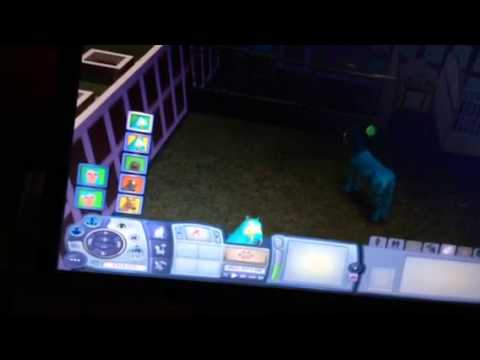 How to breed your horses on sims 3 pets