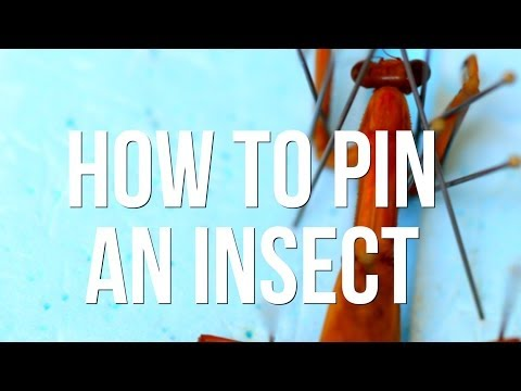 How to Pin an Insect