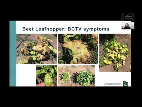 Common Insect Pests of Utah Vegetables - Identification