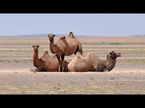 Mongolia - fauna