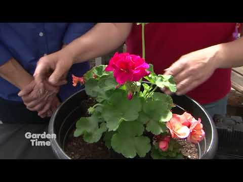 Wavra Spring Container - Planting party