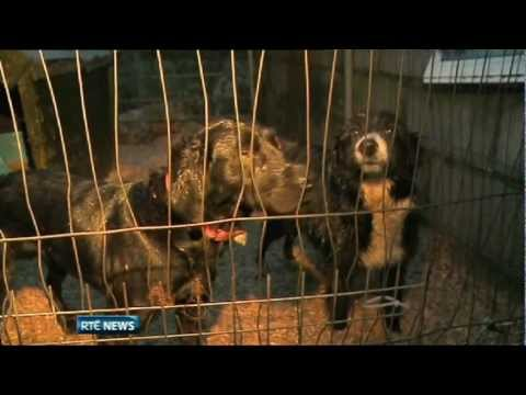 Upsurge in Abandoned Dogs