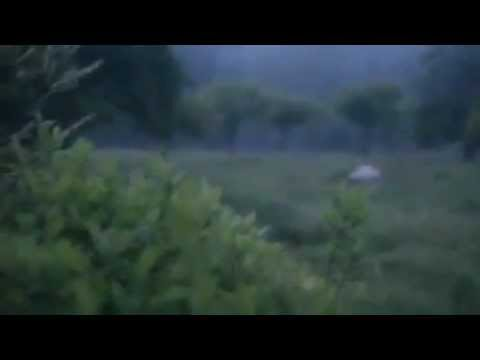 Best Lightning Bug Video