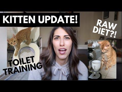 KITTEN UPDATE: RAW DIET + TOILET TRAINING FAIL! (sott ita)
