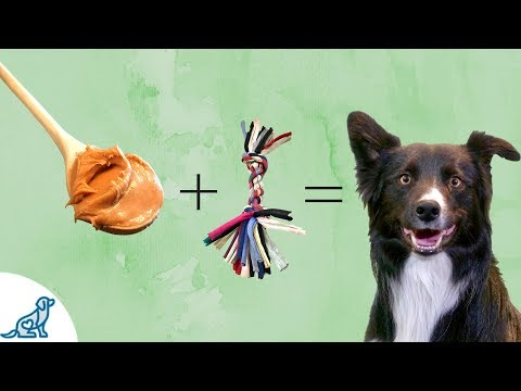 Treat Training a Dog- And When To Skip Treats To Be Successful