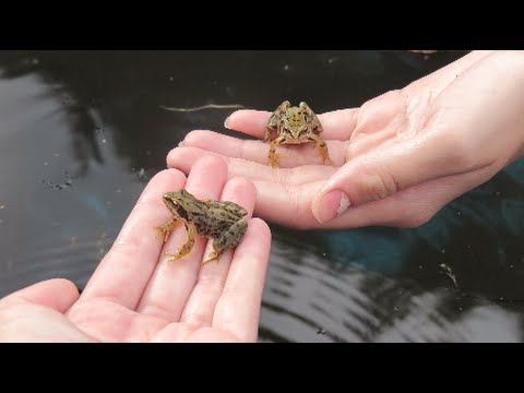 CATCHING BABY FROGS AT MY DADS ♥︎ DAY 10