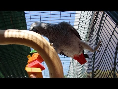 Parrot Perches, Stands, & Cage Setup Ideas