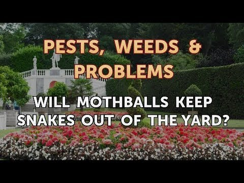 Will Mothballs Keep Snakes Out of the Yard?