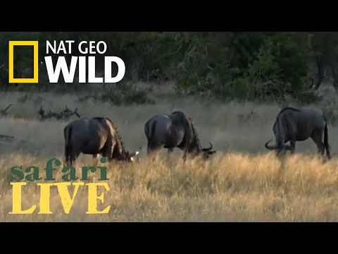 Safari Live - Day 151 | Nat Geo Wild