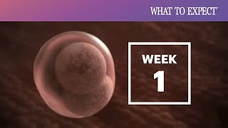 1 Week Pregnant | What To Expect