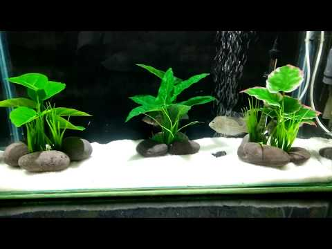 how to solve cloudy water in aquarium in hindi