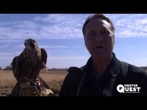Falconry - How to Get Started