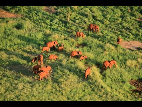 Aerial survey counts African elephants