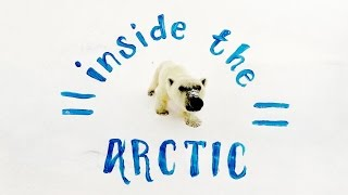 Inside the Arctic in 360º
