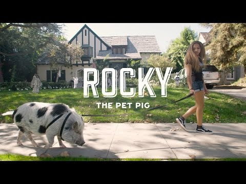 Rocky the Pet Pig