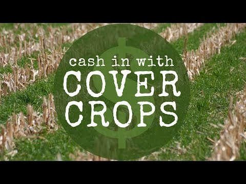 Cash in with Cover Crops