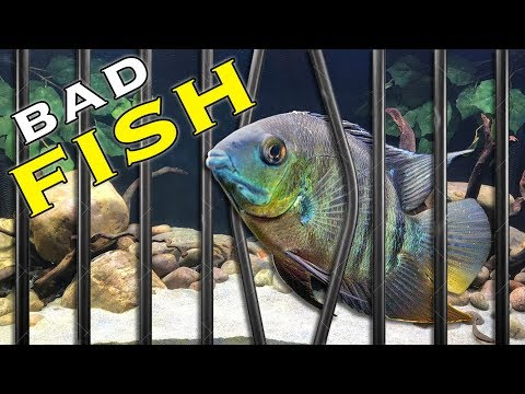 How to Stop Fish Attacking Other Fish