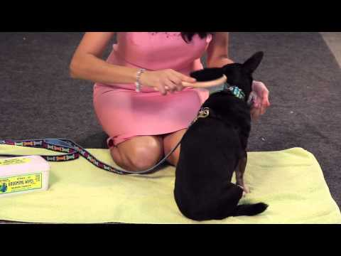 How to Improve the Color on a Black Dog's Coat : Dog Care Tips