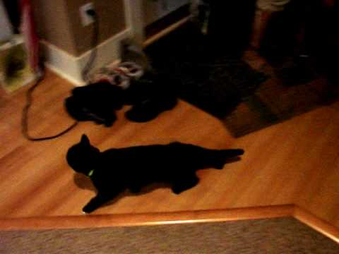 How to Catch Your Missing Cat by Kelli-Jo Mitchell.wmv