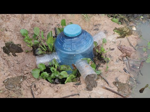 DIV Creative Man Make Frog Trap Using Plastic Bottle To Catch A Lot Of Frogs