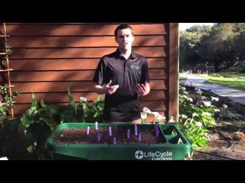 Plastic Container Gardening