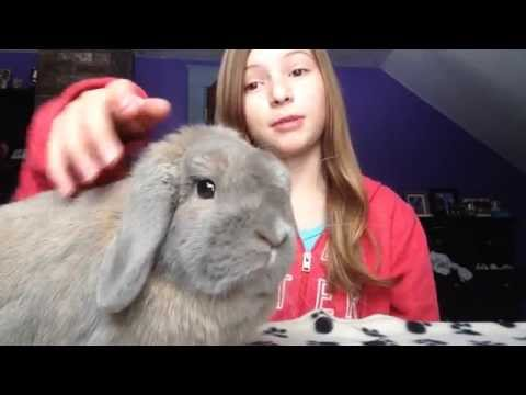 How to Build a Rabbit Cage (Cheap, Easy and Safe).  Holland Lop / Rabbit Care / House Rabbit Video