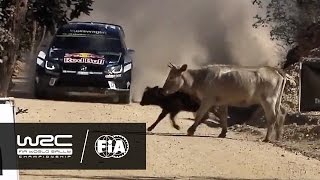 WRC 2016 REVIEW: Rally Guanajuato México