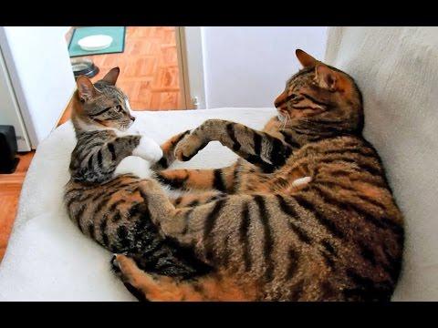 Male Cat vs Female Kitten