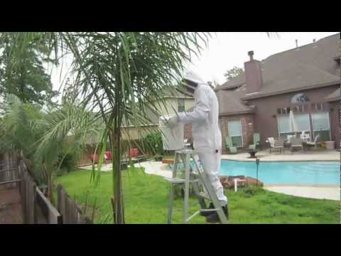 16 Second Bee Swarm Removal