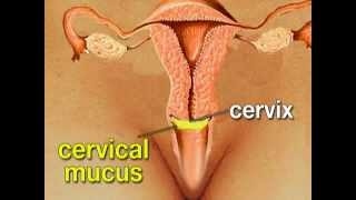 How To Control Birth Intra Uterine Devices Iuds