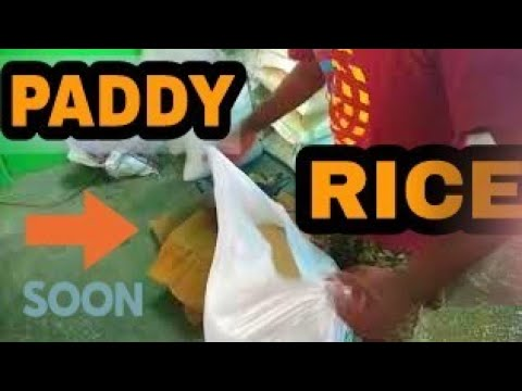 PADDY TO RICE || HOW TO MAKE PLASTIC RICE