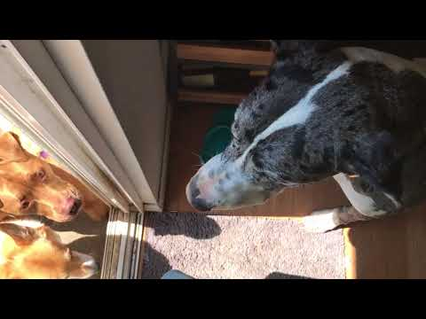 Stop Dog Door Dashing w/Clever Game