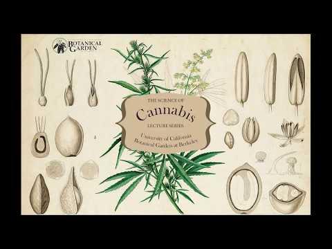 The Neuroscience of Cannabis with David Presti