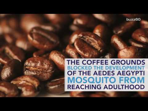 Coffee May be the Secret Zika Mosquito Repellent