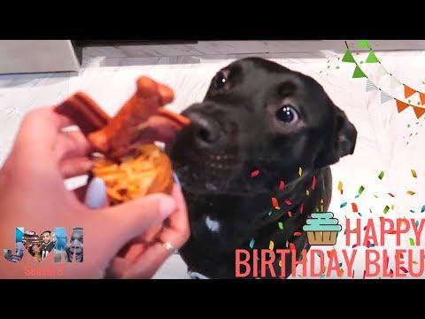 Our Dog's Birthday Party - Happy Birthday Bleu! 🐾🎉