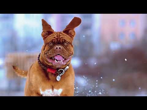 National Purebred Dog Day 2018